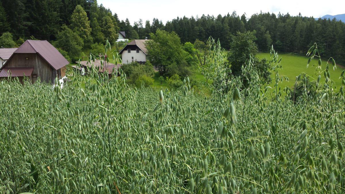 kmetija-hudobnik-06